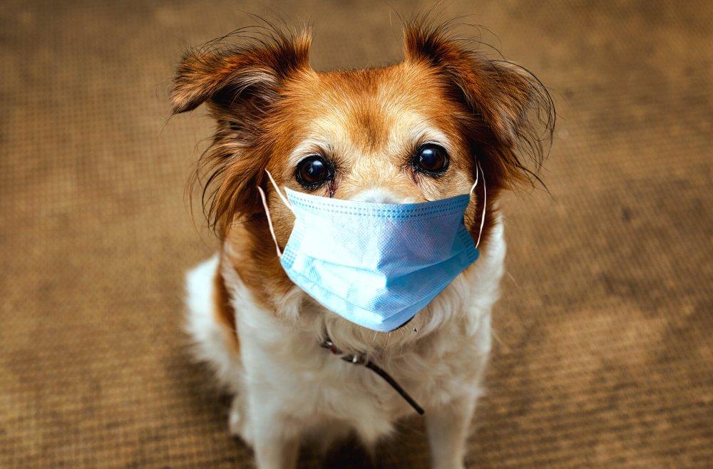 Sick Pet Care